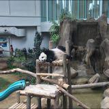 pandapandabella