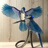 joybirds