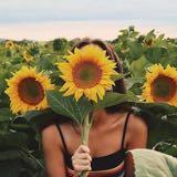 sunfloower