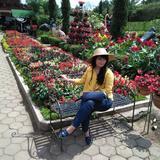 rose.prelovednnew