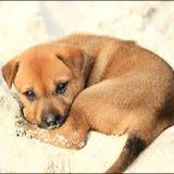 curiodoggy