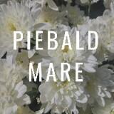 piebald.mare