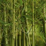 bamboos_store