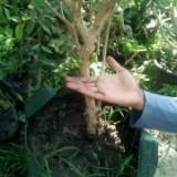 tanaman.online