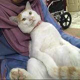 catlover_