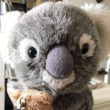 koalahlah