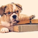 bookhoarderph