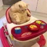 kucingmontel