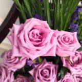 rosesmay