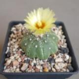 cacti_spots