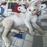 kitten85