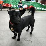 blackdog97