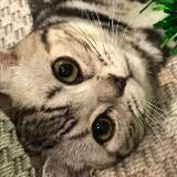 catcat2020