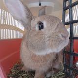 rabbit1104