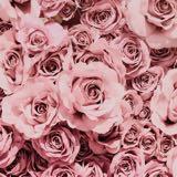 pinkcloud.0204