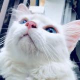 catlover33