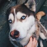 husky_life