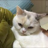 meow_852
