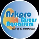askprodiscusaquarium