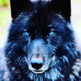 laurawolf22
