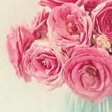 .pinkrose.