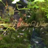 beautyunderwater