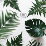 zensanctuaryplants