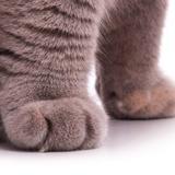 quality_cat
