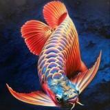 fishkeeper07