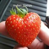 andien_shidqia