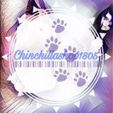 chinchillashop