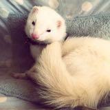 weasel.trove