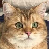 kittykingdom