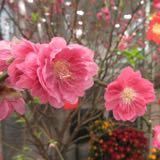blossomspring88