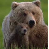 bearandcub