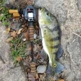 fishfishfishhhh
