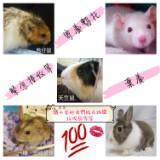 love_animals2007