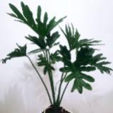 plantsofpablo