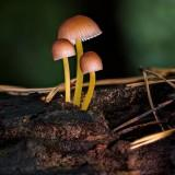 mushroommshop