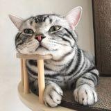catsbath