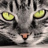 cat33eye