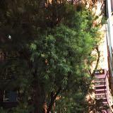 backyard91