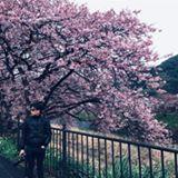 angus_lai_lai
