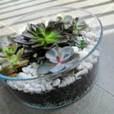 sweety_plants