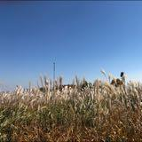 daniel_anghw