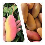 fruitsome