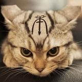 stupidcat_pro