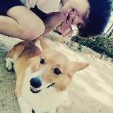 corgi_baek04