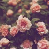flowerlilies