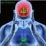 aminullahalsasaqi2260